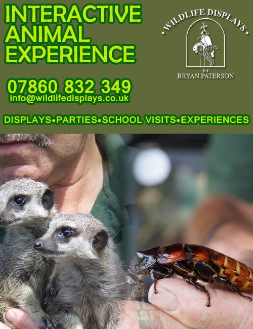 Shropshire Wildlife  Display