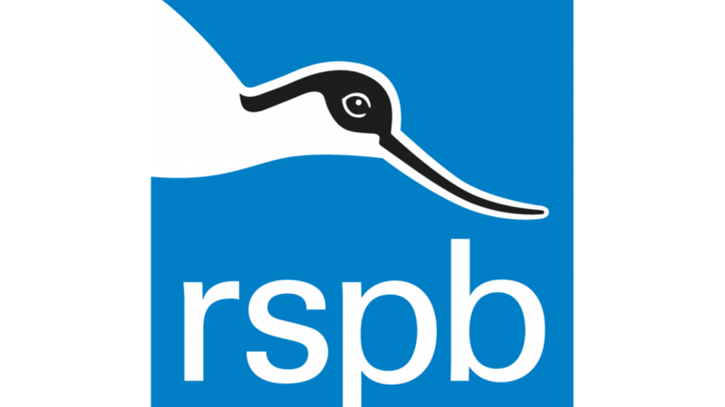 RSPB's Big Garden Bird Watch